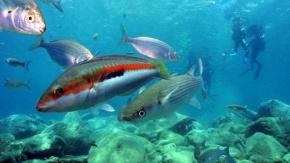 Antalya'nın hayran bırakan su altı fotoğrafları