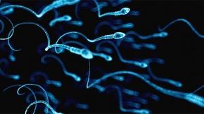 Erkekleri üzen araştırma sonucu! Koronavirüs testislerde uzun süre kalabiliyor...