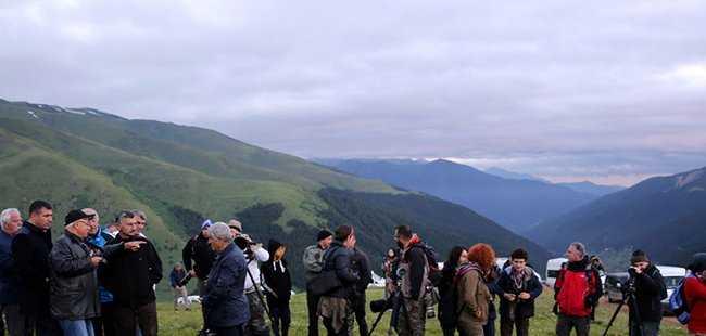 Dağ Horozu'nu göremediler
