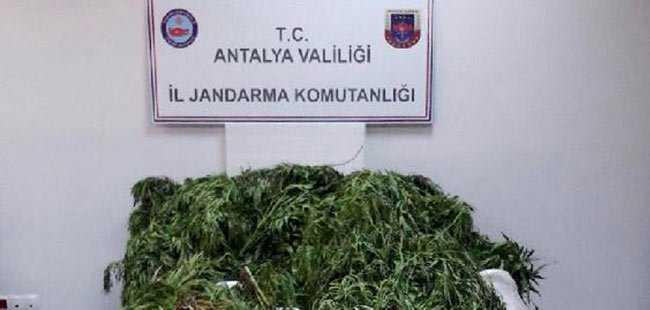 Antalya'da 235 kilogram esrar ele geçirildi