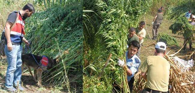Antalya'da 600 kilo esrar ele geçirildi