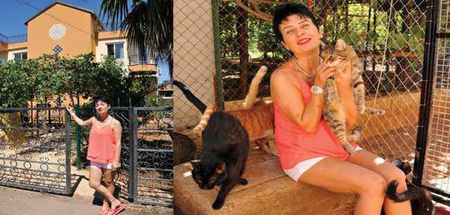 Yaralı ve hasta kediler için tripleks villa kiraladı