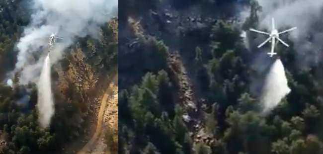 Milli Park'ta orman yangını