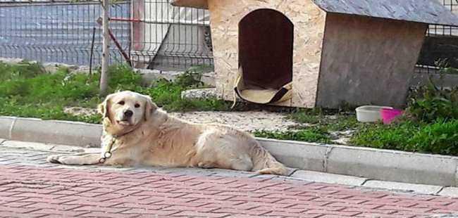 3 köpek öldürüldü