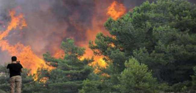 226 orman yangını çıktı