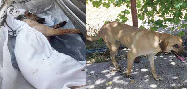 Köpeğini vuran komşusundan şikayetçi oldu