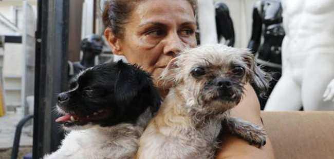 Mahsur kalan köpekleri komşular kurtardı