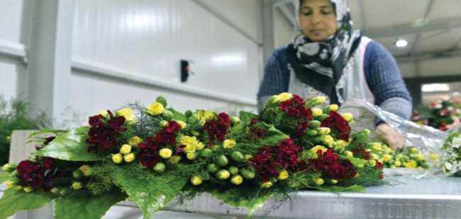 Antalya'dan Avrupa'ya 50 milyon dal çiçek
