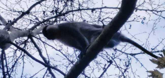 Kemer'de görülen maymun şaşkınlık yarattı