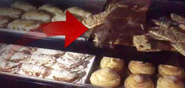 Tezgahında farenin cirit attığı pastane kapatıldı
