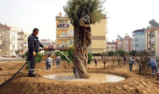 Anadolu Bahçesi'ne 60 ağaç daha dikildi