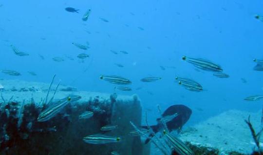 61 balık türü tespit edildi
