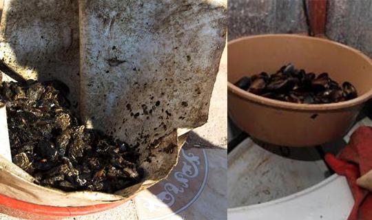 Hileli köfteden sonra küflenmiş midye skandalı