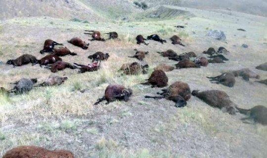 74 koyunu telef olan çoban şans eseri kurtuldu