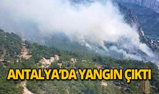 Manavgat'ta sabah saatlerinde yangın