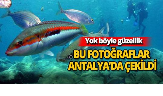Bu fotoğraflar Antalya'da çekildi