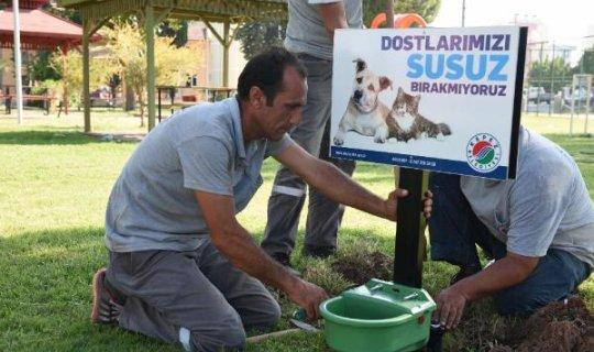 Kepez Belediyesi'nden sokak hayvanlarına suluk