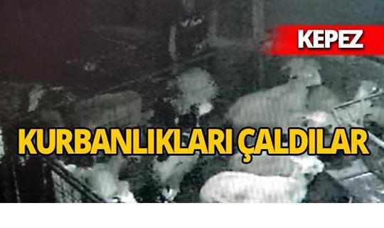 Antalya'da bayram öncesi hırsızlık