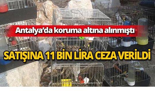 Antalya'da koruma altındaki kuşun satışına ceza