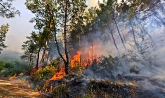 Antalya Orman Bölge Müdürü'nden tatilcilere uyarı geldi