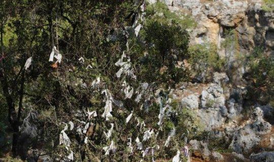 Dilek için ağacın dalına cips paketi bile bağlamışlar