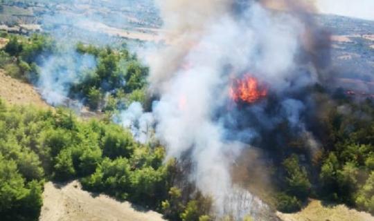 Manavgat'ta yine ciğerlerimiz yandı!