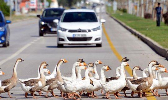 Trafik onlar için durdu