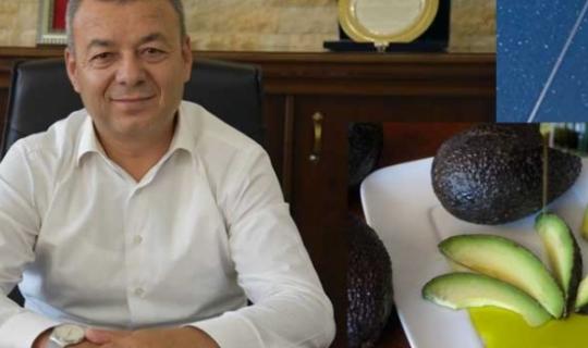 Türkiye'de avokado üretiminin yüzde 81'i Alanya'da