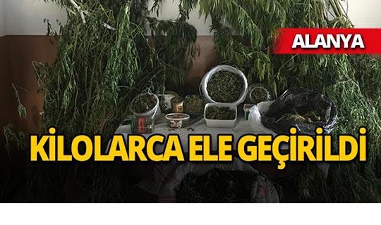 Alanya'da operasyon : Bahçeye ekili halde bulundu