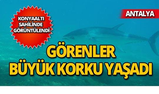 Antalya'da görüntülendi!