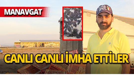 Manavgat'ta canlı canlı imha ettiler!