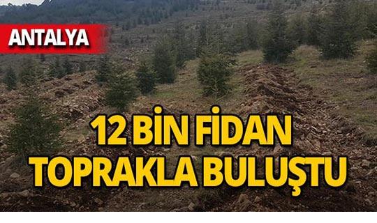 Antalya'da 'Bal Ormanı' projesi!