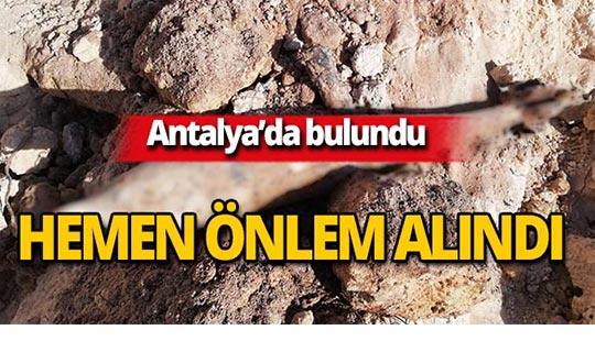 Antalya'da bulundu, polis hemen önlem aldı!
