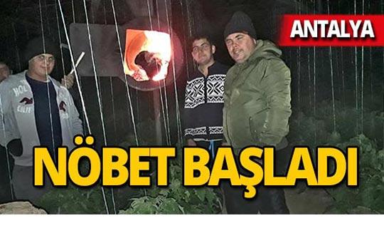 Antalya'da 'don nöbeti' başladı
