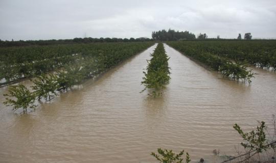 Adana'da tarım alanları su altında kaldı