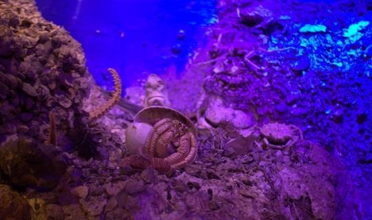Antalya Deniz Biyolojisi Müzesi 25 bin ziyaretçiye ağırladı