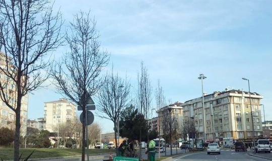 Büyükçekmece Belediyesi yeşil alanlarını koruyor