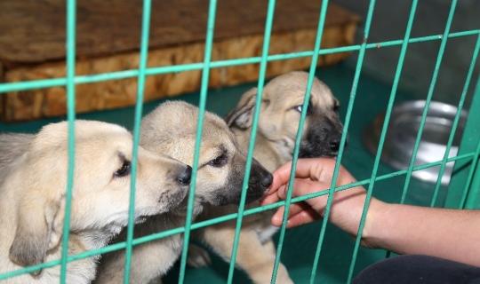 Çankaya'da 22 bin 547 hayvana tedavi