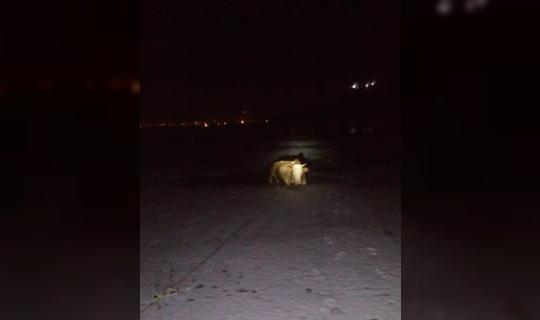 İtfaiye ekiplerinden inek kurtarma operasyonu