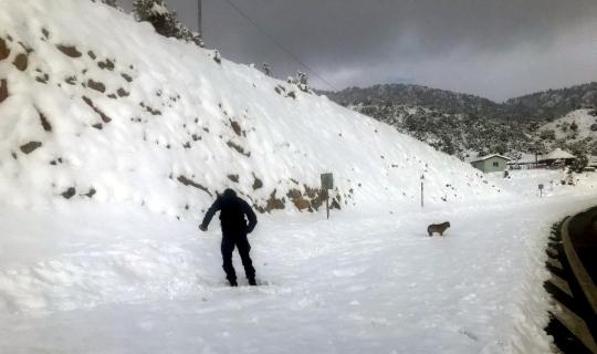 Jandarma, sokak hayvanlarına yiyecek bıraktı