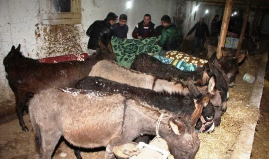 Jandarmanın donmak üzereyken bulduğu sahipsiz 15 eşek vatandaşlara ücretsiz dağıtıldı