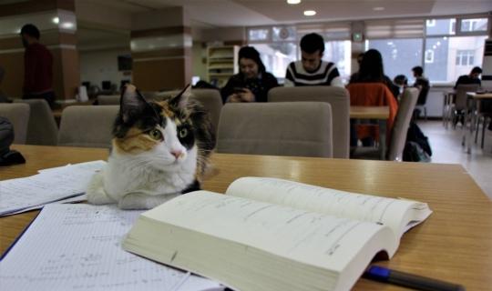 Kediler üniversitenin kütüphanesine sığındı
