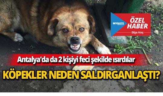 Köpekler neden saldırganlaştı?