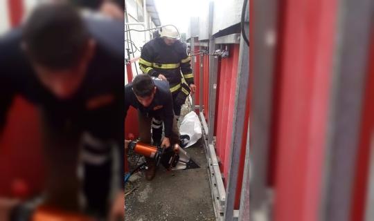 Paletlere sıkışan köpeği itfaiye ekipleri kurtardı
