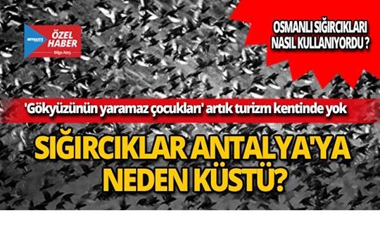 Sığırcıklar Antalya'ya neden küstü?