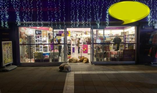 Sokak köpekleri ısınmak için dükkan kapısını mesken tuttu