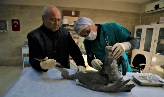 Yaralı balıkçıl kuşu tedavi edildi