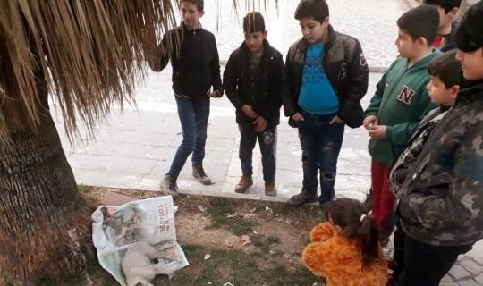 Zehirlenen yavru köpek çocukların gözü önünde öldü
