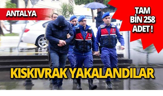 Antalya'da bin 258 adet ele geçirildi!