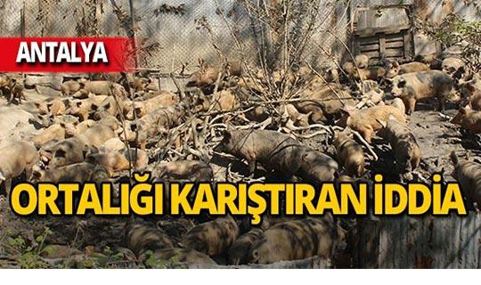 Antalya'da korkunç iddia ortalığı karıştırdı!